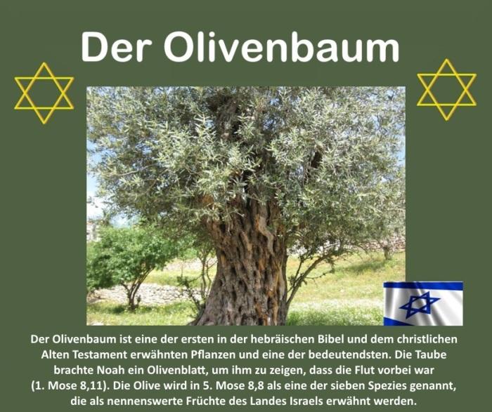 DerOlivenbaum+Israel