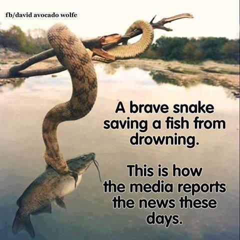 snake-saves-fish