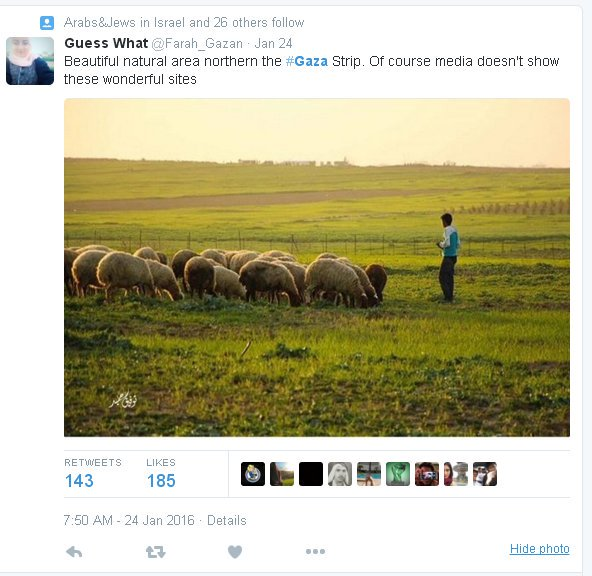 crowded-gaza-sheep